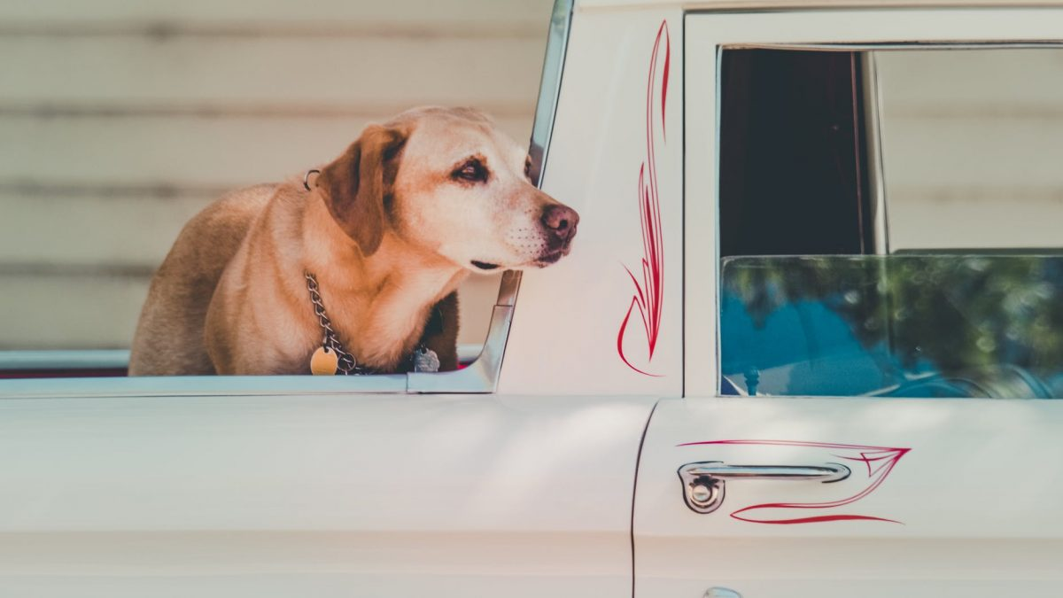 bezpieczna podróż z psem jest możliwa